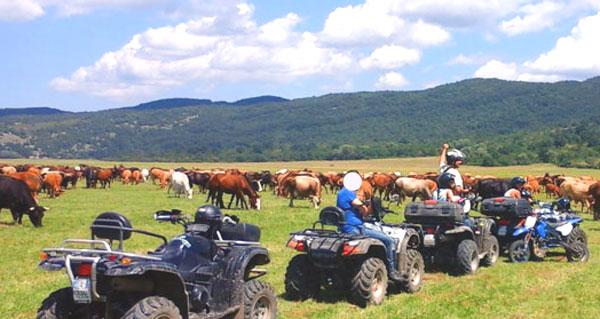 Filignano: a bordo del suo quad si scontra con un cavallo. Pauroso incidente per un giovane 27enne.
