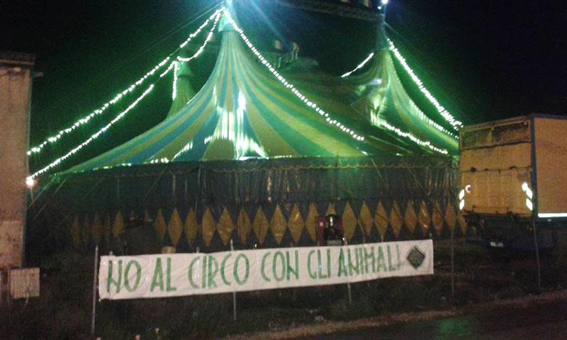 Isernia: la Foresta che Avanza contro il circo fatto con gli animali. Uno striscione di protesta è stato affisso in citta.