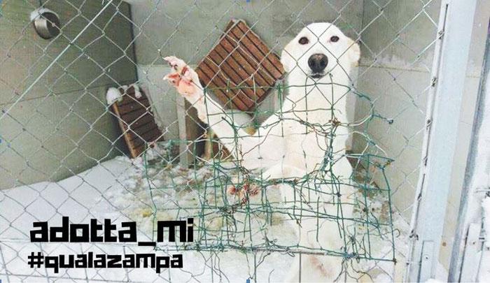 Adottami, anche in Molise al via la campagna per aiutare i cani costretti al gelo e in rifugi stretti. Parte da Ripabottoni l'idea.