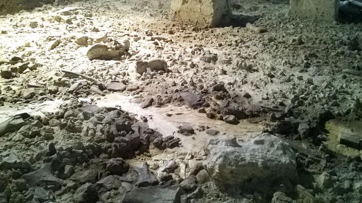 Isernia: sabato 18 maggio al Museo Nazionale del Paleolitico l'esposizione straordinaria del dentino.