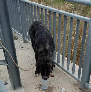sesto interno web cane