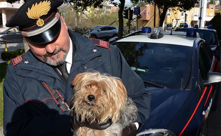 Sesto Campano: Cagnolino abbandonato lungo strada provinciale, salvato dai Carabinieri. L'amico a quattro zampe scaraventato da una vettura in corsa.