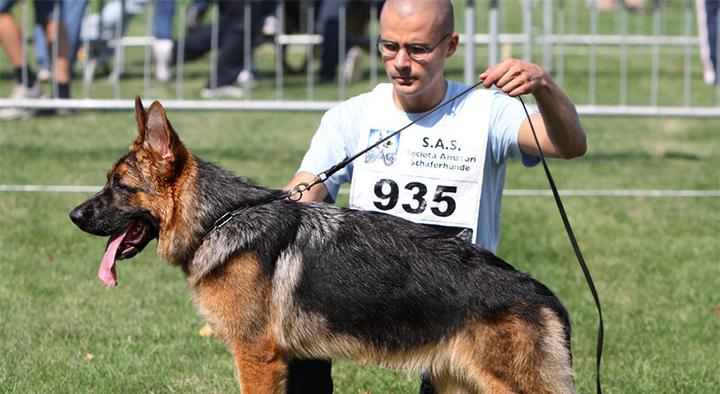 Pozzilli: domenica 13 maggio il secondo raduno nazionale Memorial Ugo Petrecca. Esposizione canina proposta dalla S.A.S. In mostra i pastori tedeschi di tutta Italia.