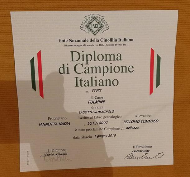 campione italiano fulmine lagotto