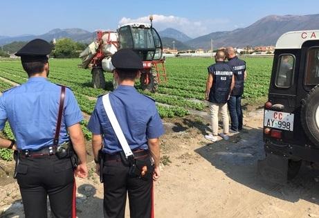 Carovilli: Tutela della salute dei lavoratori e della sicurezza sui luoghi di lavoro, denunciato il titolare di una azienda agricola.