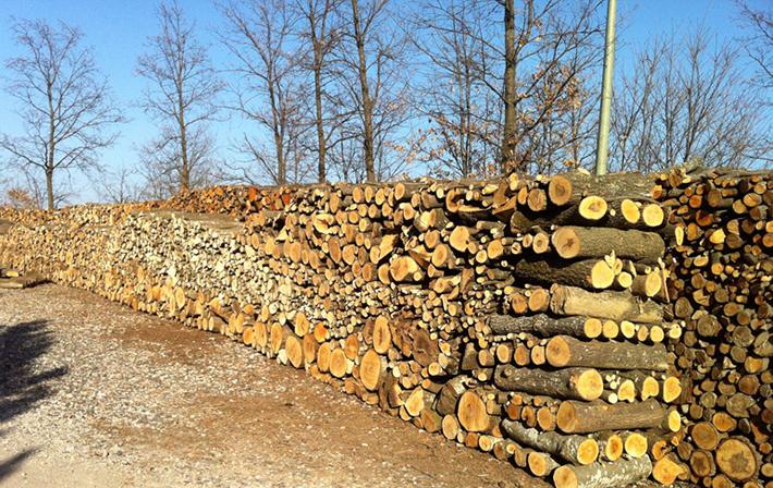 Colli a Volturno: il sindaco Incollingo emana un avviso per la richiesta di materiale legnoso ad uso civico.