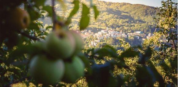 Le Mele per tutelare l'Orso Bruno Marsicano. Il 10 novembre i bambini di Castel Del Giudice porteranno le mele ai plantigradi della Majella.