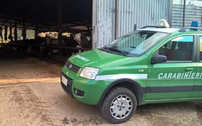 Isernia: Controlli di polizia veterinaria da parte dei Carabinieri Forestali. Scatta una sanzione.