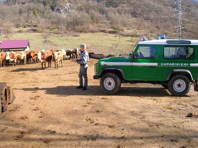 Isernia: Controlli di polizia veterinaria da parte dei Carabinieri Forestali. Scattano sanzioni.