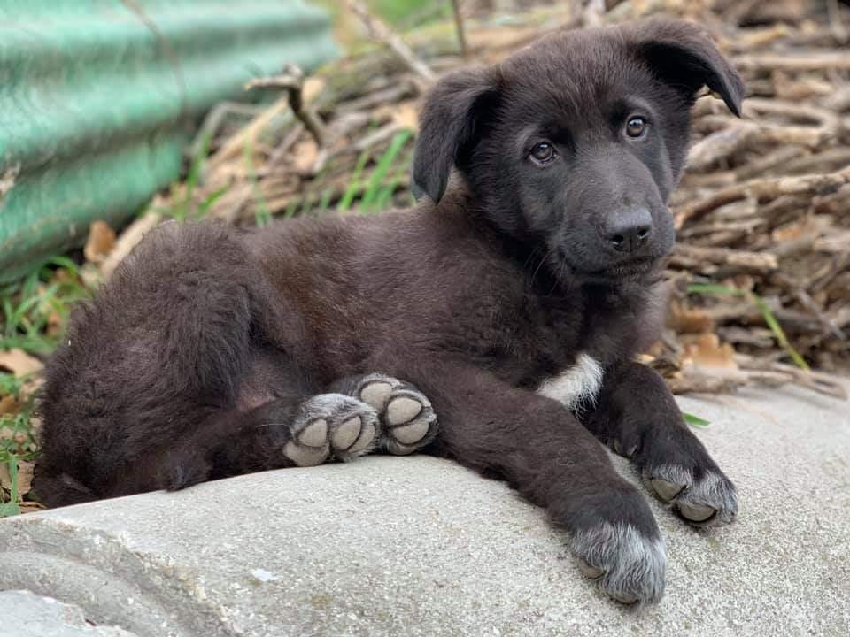 Roccaravindola: tre cuccioli cercano casa. Scatta la maratona di solidarietà per l'affidamento degli animali.
