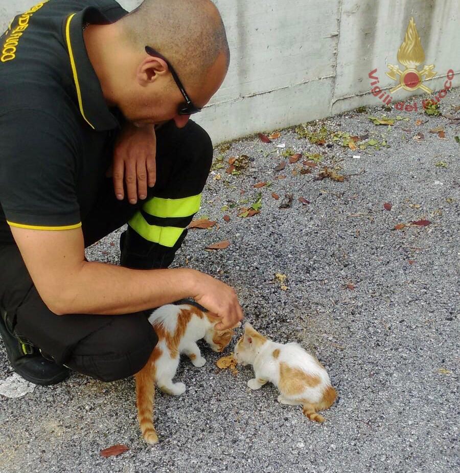 Isernia: i Vigili del Fuoco recuperano tre gatti abbandonati nel cortile di un condominio.