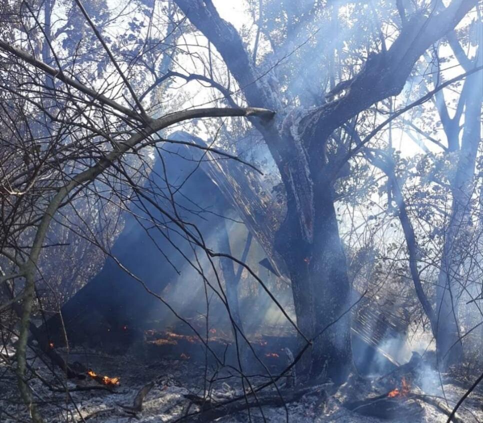 Colli a Volturno: vasto incendio nei pressi della frazione Valloni. Ettari di bosco e uliveti andati in fumo.